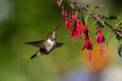 Kolibri-1.jpg-Hepp-19.jpg