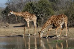 Verschoben!!! -- Multivisions-Show:  'Südafrika'